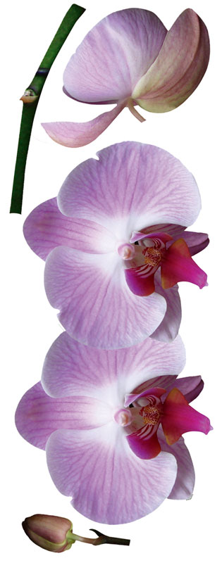Dimex ST2 017 Samolepicí dekorace na zeď Orchids, 65x165 cm (orchidej)